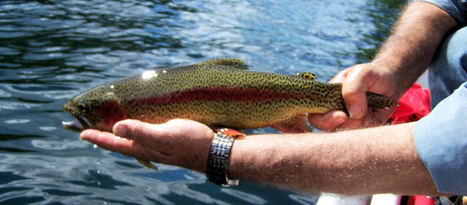 BC Fly Fishing Lodge & Fly Fishing Guides | Northern Lights